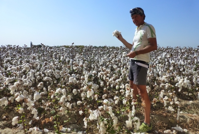 Cotton after cotton field