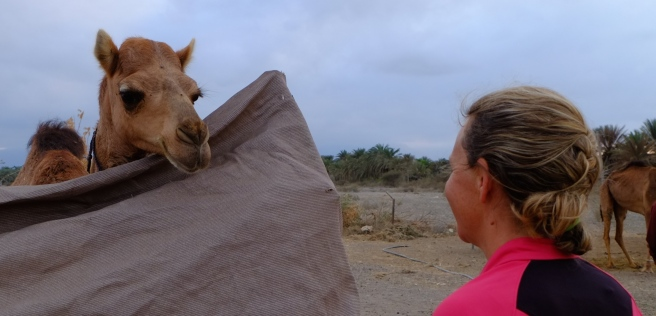 At a small camel farm of one of Faris' friends