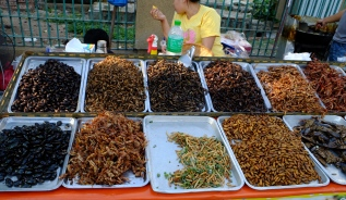 Yummie insects